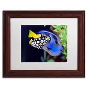 "Trademark Kurt Shaffer ""Colorful Tropical Fish"" Art, White Matte With Wood Frame, 11"" x 14"""