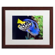 "Trademark Kurt Shaffer ""Colorful Tropical Fish"" Art, White Matte With Wood Frame, 16"" x 20"""