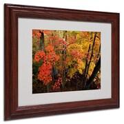 Trademark Kurt Shaffer Brilliant Autumn Forest Art, White Matte With Wood Frame, 11 x 14