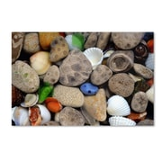 "Trademark Michelle Calkins ""Petoskey Stones lll"" Gallery-Wrapped Canvas Art, 22"" x 32"""