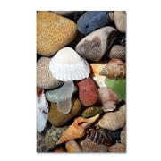 "Trademark Michelle Calkins ""Petoskey Stones lV"" Gallery-Wrapped Canvas Art, 30"" x 47"""