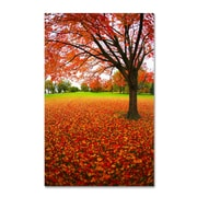 """Trademark CATeyes """"Autumn Expressions"""" Gallery-Wrapped Canvas Arts"""