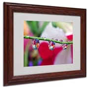 "Trademark Steve Wall ""Boquet in a Drop"" Art, White Matte W/Wood Frame, 11"" x 14"""