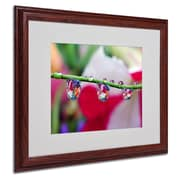 "Trademark Steve Wall ""Boquet in a Drop"" Art, White Matte W/Wood Frame, 16"" x 20"""