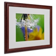 "Trademark Steve Wall ""Dandy Drops 2"" Art, White Matte W/Wood Frame, 16"" x 20"""
