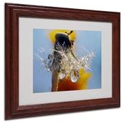 "Trademark Steve Wall ""Dandy Drops 3"" Art, White Matte W/Wood Frame, 11"" x 14"""