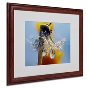"Trademark Steve Wall ""Dandy Drops 3"" Art, White Matte W/Wood Frame, 16"" x 20"""