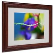 Trademark Steve Wall Groovy Drops Art, White Matte W/Wood Frame, 11 x 14