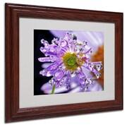 """Trademark Steve Wall """"Petal Bling"""" Art, White Matte W/Wood Frame, 11"""" x 14"""""""