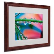 Trademark Steve Wall Secret Worlds Art, White Matte W/Wood Frame, 16 x 20