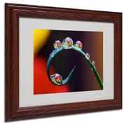 "Trademark Steve Wall ""Hidden Worlds in Water Drops"" Art, White Matte W/Wood Frame, 11"" x 14"""