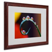"Trademark Steve Wall ""Hidden Worlds in Water Drops"" Art, White Matte W/Wood Frame, 16"" x 20"""