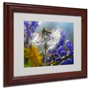 "Trademark Steve Wall ""Wet Weed Beauty"" Art, White Matte W/Wood Frame, 11"" x 14"""