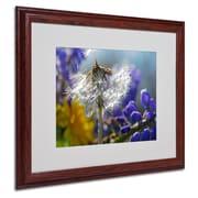 "Trademark Steve Wall ""Wet Weed Beauty"" Art, White Matte W/Wood Frame, 16"" x 20"""