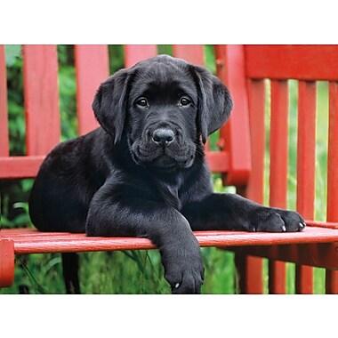 Clementoni The Black Dog, 500 Pieces