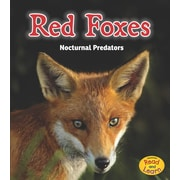 Red Foxes: Nocturnal Predators (Night Safari)