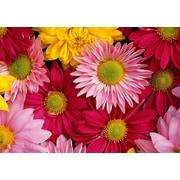 Bungalow Flooring Fo Flor Flowers Mat; 3'10'' x 5'6''
