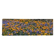 iCanvas Panoramic Table Mountain, California Photographic Print on Canvas; 12'' H x 36'' W x 1.5'' D