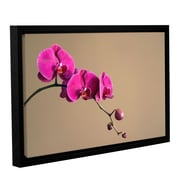 ArtWall Magenta Orchid by Elena Ray Framed Photographic Print on Wrapped Canvas; 32'' H x 48'' W