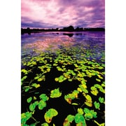 Art Master Lilly Pad Sunset Gallery by Nathan Lovas Photographic Print on Wrapped Canvas