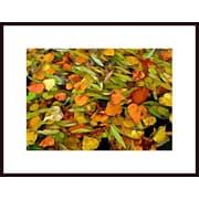 Printfinders 'Autumn Leaves Abstract' by John Nakata Framed Photographic Print