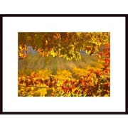 Printfinders 'Autumn Leaves' by John Nakata Framed Photographic Print