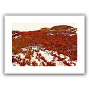 ArtWall 'Red Ice on Beach I' by Linda Parker Canvas Poster; 22'' H x 16'' W
