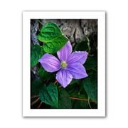 ArtWall 'Flower' by David Liam Kyle Photographic Print on Canvas; 24'' H x 16'' W