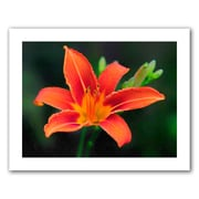 ArtWall 'Petals In Focus' by David Liam Kyle Photographic Print on Canvas Poster; 18'' H x 24'' W