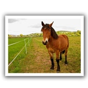 ArtWall Horse Painted II' by Lindsey Janich Photographic Print on Rolled Canvas; 18'' H x 22'' W