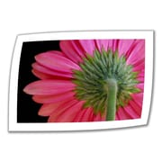 ArtWall Shy Flower' by Dan Holm Photographic Print on Rolled Canvas; 28'' H x 40'' W