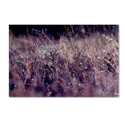 "Trademark Fine Art BC0143-C2232GG ""Purple Rain"" by Beata Czyzowska Young 22"" x 32"" Frameless Art"