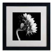 """Trademark Fine Art ALI0294-B1616MF """"Sunflower"""" by Michael Harrison 16"""" x 16"""" Framed Art, White Matted"""