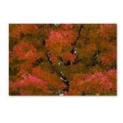 """Trademark Fine Art KS0137-C2232GG """"Autumn Maple Splendor"""" by Kurt Shaffer 22"""" x 32"""" Frameless Art"""