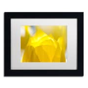 "Trademark Fine Art KS0156-B1114MF ""Yellow Tulip"" by Kurt Shaffer 11"" x 14"" Framed Art, White Matted"