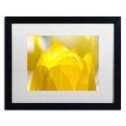 "Trademark Fine Art KS0156-B1620MF ""Yellow Tulip"" by Kurt Shaffer 16"" x 20"" Framed Art, White Matted"