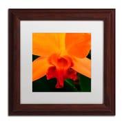 "Trademark Fine Art KS0164-W1111MF ""Brilliant Orchid on Fire"" by Kurt Shaffer 11"" x 11"" Framed Art, White Matted"