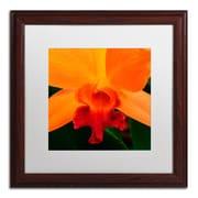 "Trademark Fine Art KS0164-W1616MF ""Brilliant Orchid on Fire"" by Kurt Shaffer 16"" x 16"" Framed Art, White Matted"