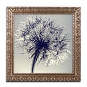 "Trademark Fine Art BC0134-G1616F ""Morning Sparkles"" by Beata Czyzowska Young 16"" x 16"" Framed Art"