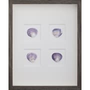 Mirror Image Home Clam Shells Framed Graphic Art; Brown