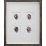 Mirror Image Home Tiger Cowrie Shells Framed Graphic Art; Brown