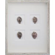 Mirror Image Home Tiger Cowrie Shells Framed Graphic Art; White Distressed