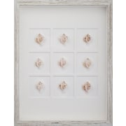 Mirror Image Home Murex Shells Framed Graphic Art; White Distressed