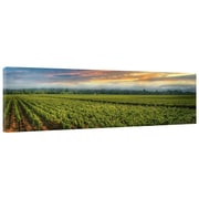 Great Big Photos Napa Flats Photographic Print on Wrapped Canvas