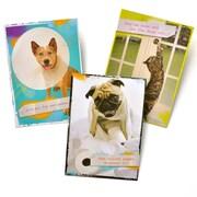 Gartner Greetings Pet Humor Greeting Cards, 3 pack, Birthday, Wiped