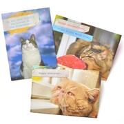 Gartner Greetings Pet Humor Greeting Cards, 3 pack, Birthday
