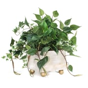 Dalmarko Designs Mixed Greenery Table Top Plant in Footed Wooden Planter