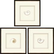 Paragon Pearled Nautilus 3 Piece Framed Graphic Art Shadow Box Set (Set of 3)