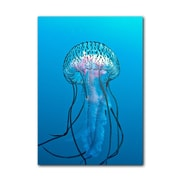 Ready2hangart Jelly Fish by Christopher Doherty Photographic Print on Canvas