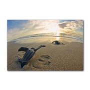 Ready2hangart 'Leatherback' by Christopher Doherty Photographic Printt on Canvas